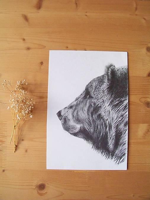 Kresba : Medveď - Maco