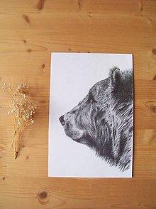Kresby - Kresba : Medveď - Maco - 8555282_