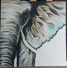 Obrazy - slon - 8561009_
