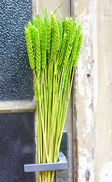 Dekorácie - Obilie zelené - 8575042_