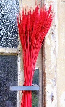 Dekorácie - Obilie červené - 8575074_