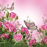 - motýle - 8573459_