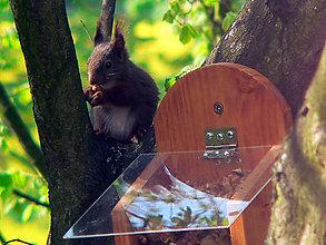 Pre zvieratká - Krmítko pre veveričky - 8579166_