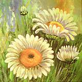 - kvety 96 - 8586579_