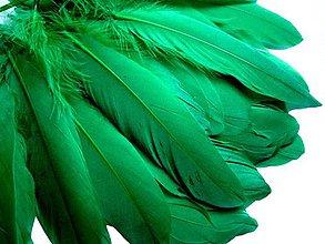Suroviny - 39. Zelené letky, mix 10 ks - 8590478_