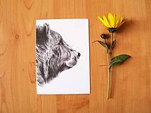 Papiernictvo - Pohľadnica: Medveď - 8603457_