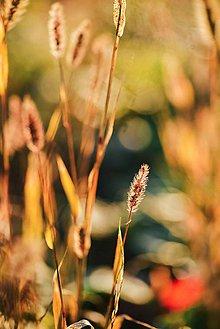 Grafika - Jesenné svetlo - 8603525_