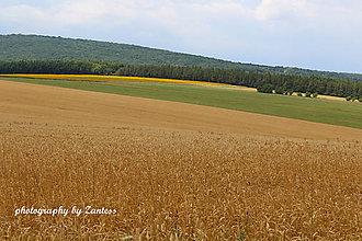 Fotografie - Autorská fotografia: Krížom cez pole - 8632862_