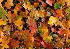 Textil - Látka Jesenné lístie - 8659485_