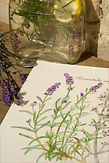 - Akvarelový obraz Levanduľa lekárska - Lavandula angustifolia - 8662332_
