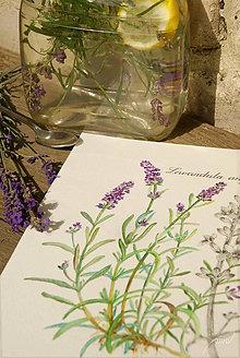 Obrazy - Akvarelový obraz Levanduľa lekárska - Lavandula angustifolia - 8662332_