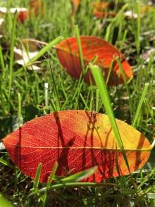 Fotografie - Farebná jesenná paleta - 8668308_