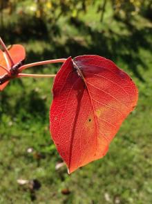 Fotografie - Keď jeseň maľuje - 8670482_