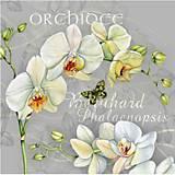 - orchidea - 8680986_