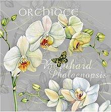 Papier - orchidea - 8680986_