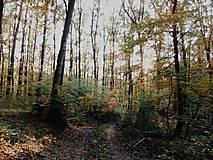 Fotografie - Na potulkách prírodou - 8692103_