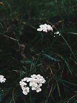 Fotografie - Na potulkách prírodou - 8692121_