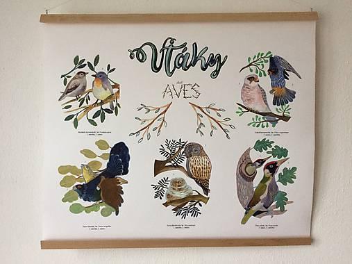 Obrazy - Vtáky Plagát 1 prírodný - 8693110_