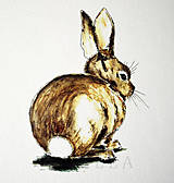 Kresby - Kolekcia zvieratiek - 8702378_