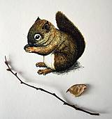 - Veverička farebná - 8703455_
