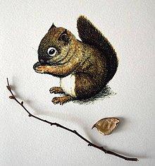 Kresby - Veverička farebná - 8703455_