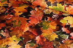 - Látka Jesenné lístie - 8718793_