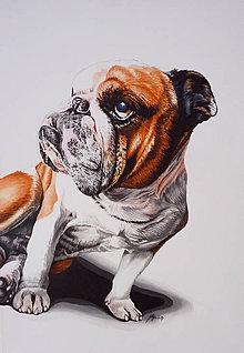 Obrazy - maľba psa II. - 8719483_