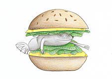 Obrazy - Žabí hamburger - 8716977_