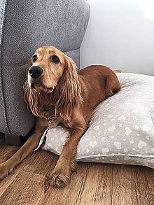Pre zvieratká - Poťah na pelech pre psov - Bielé srdiečka - 8747453_