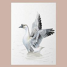 Obrazy - Vzlétání - originál, akvarel - 8766581_