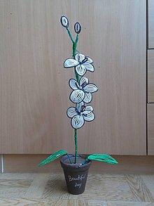 Dekorácie - Bielo-čierna orichidea - 8772849_