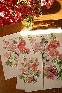 Obrazy - Botanický obrázok Slezovité , tlač, veľkosť A5 - 8837269_