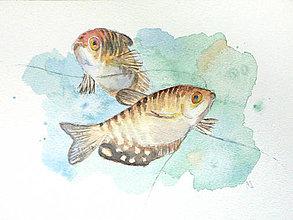 Obrazy - Ryby čichavci - originál, akvarel - 8842272_