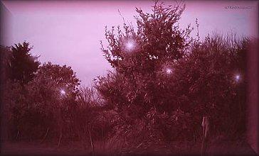 Fotografie - stromy 2_tree 2_do červena_red - 8851434_