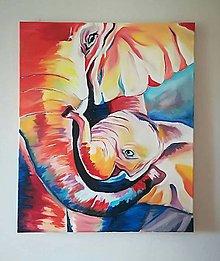 Obrazy - slony - 8857049_