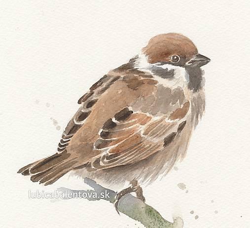 Vrabec - akvarel