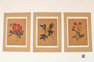 """Obrázky - Sada akvarelu """"Natur Botanical"""" (B.) - 8869994_"""