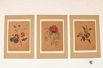 """Obrázky - Sada akvarelu """"Natur Botanical"""" (C.) - 8870002_"""