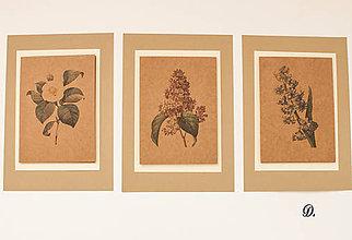 "Obrázky - Sada akvarelu ""Natur Botanical"" (D.) - 8870006_"