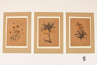 """Obrázky - Sada akvarelu """"Natur Botanical"""" (G.) - 8870022_"""