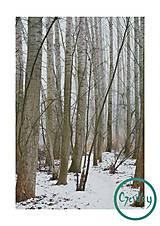 Fotografie - Zimná krajina III. - 8882628_
