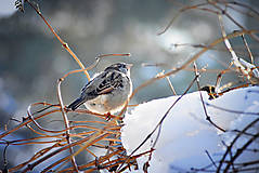Fotografie - Bird - 8891976_