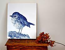 Kresby - slávik červienka (print na drevenom ráme) - 8890315_
