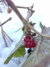 Fotografie - Zamrzla som - 8905899_