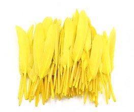 Suroviny - 51. Žlté letky, mix 10ks - 8913493_