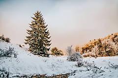 Fotografie - zasnežený ihličnatý stromček v zimnej krajine - 8928981_
