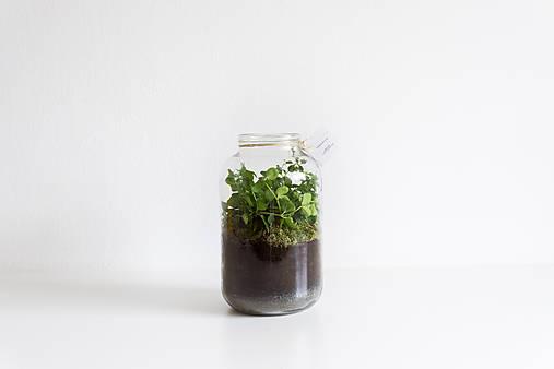 Dekorácie - Terárium Peperomia rotundifolia - 8957040_