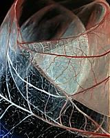 Obrazy - Leaves II - 8964562_