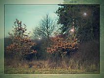Fotografie - stromy 3_tree 3_do zelena_green - 8964943_