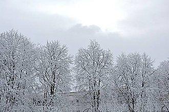 Fotografie - Zima V - 8971919_